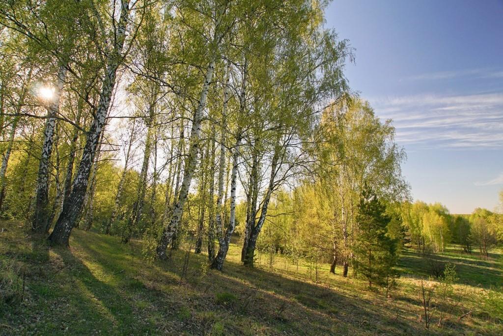 Свежесть весеннего леса от Владислава Тябина 02