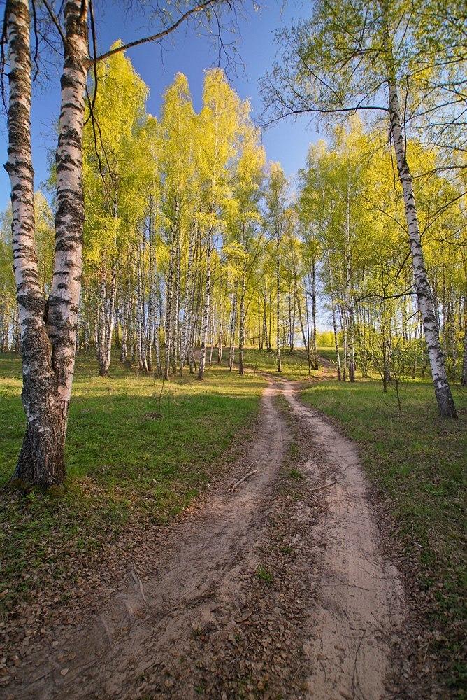 Свежесть весеннего леса от Владислава Тябина 03