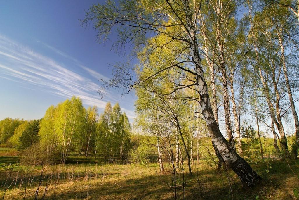 Свежесть весеннего леса от Владислава Тябина 04