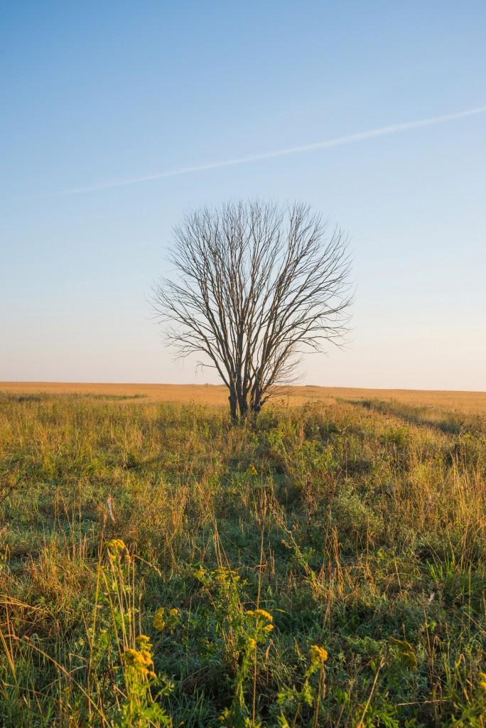 Утренний рассвет во Владимирской области 09