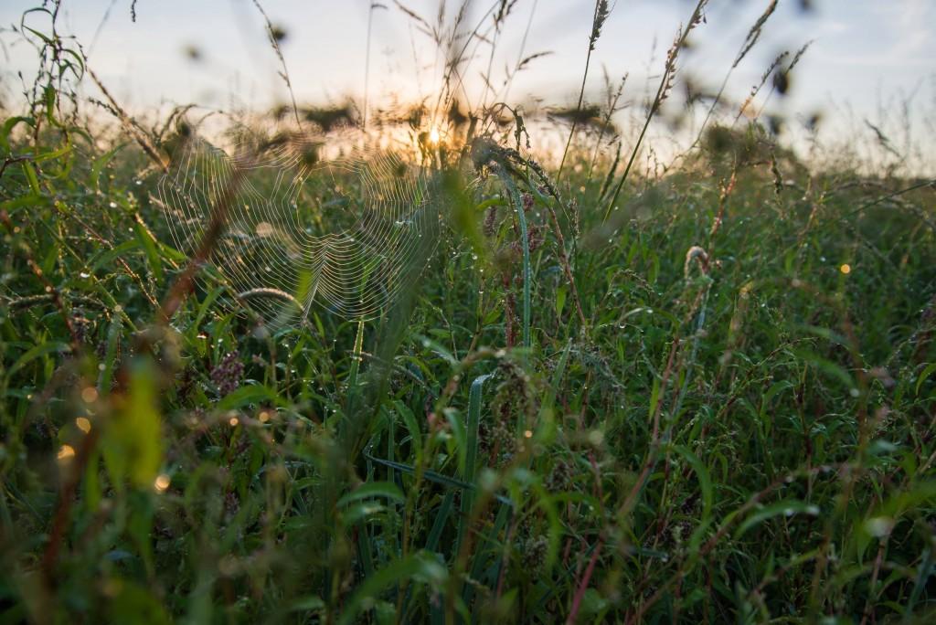 Утренний рассвет во Владимирской области 11
