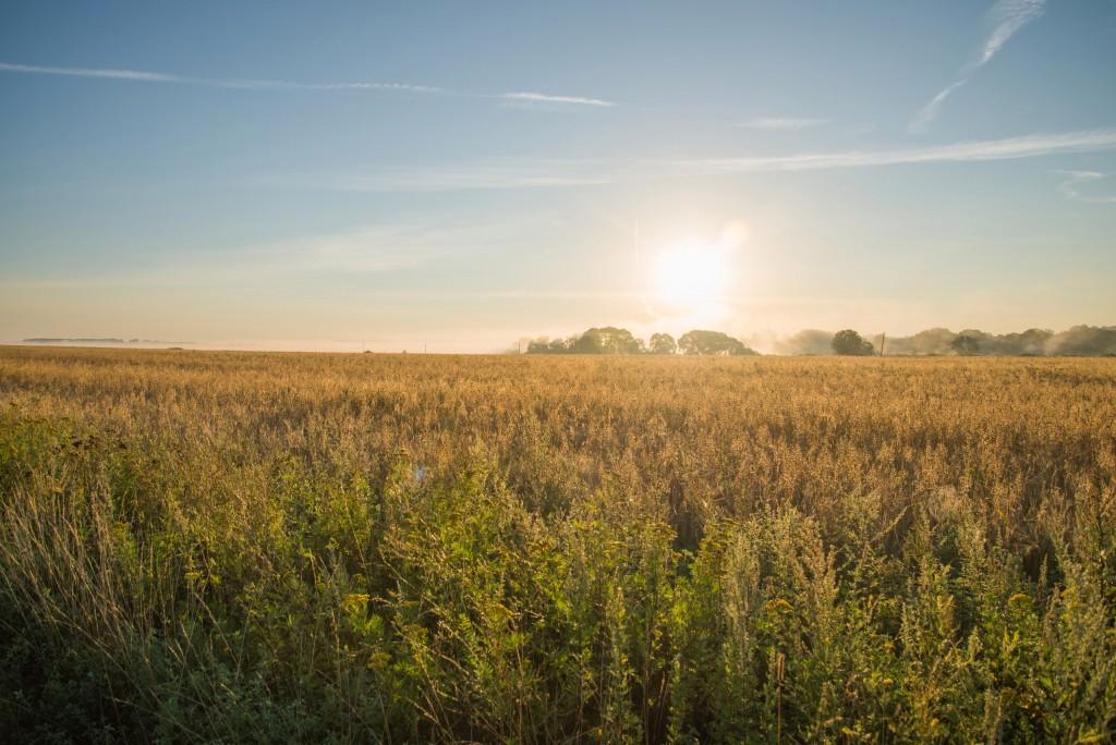 Утренний рассвет во Владимирской области 14