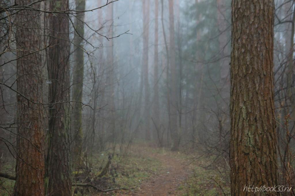 Вербовский в тумане 02