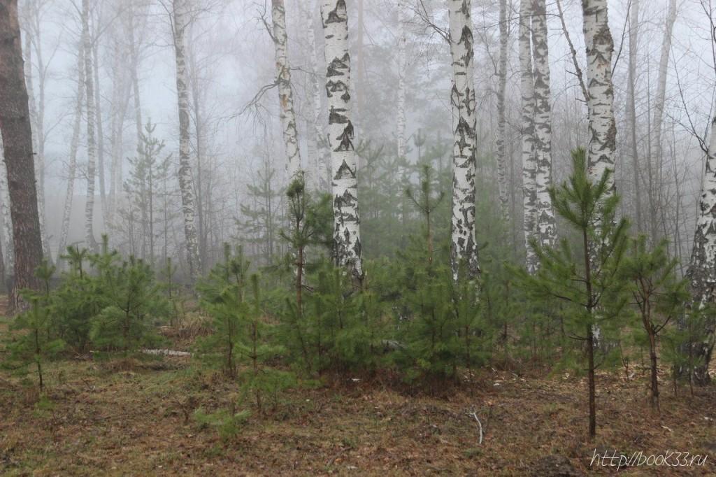 Вербовский в тумане 03