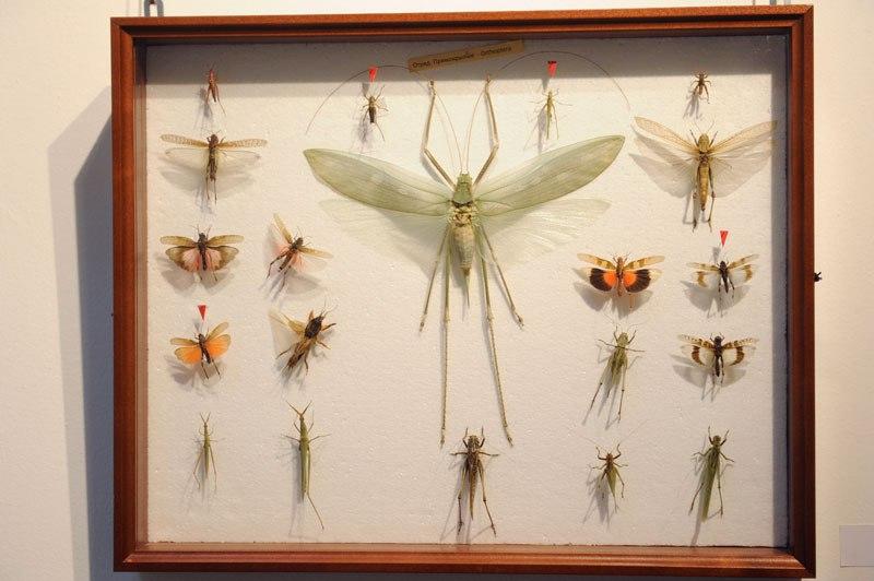 В Музее природы открылась выставка «Рождённые летать» 03