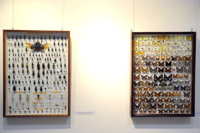 В Музее природы открылась выставка «Рождённые летать» 04