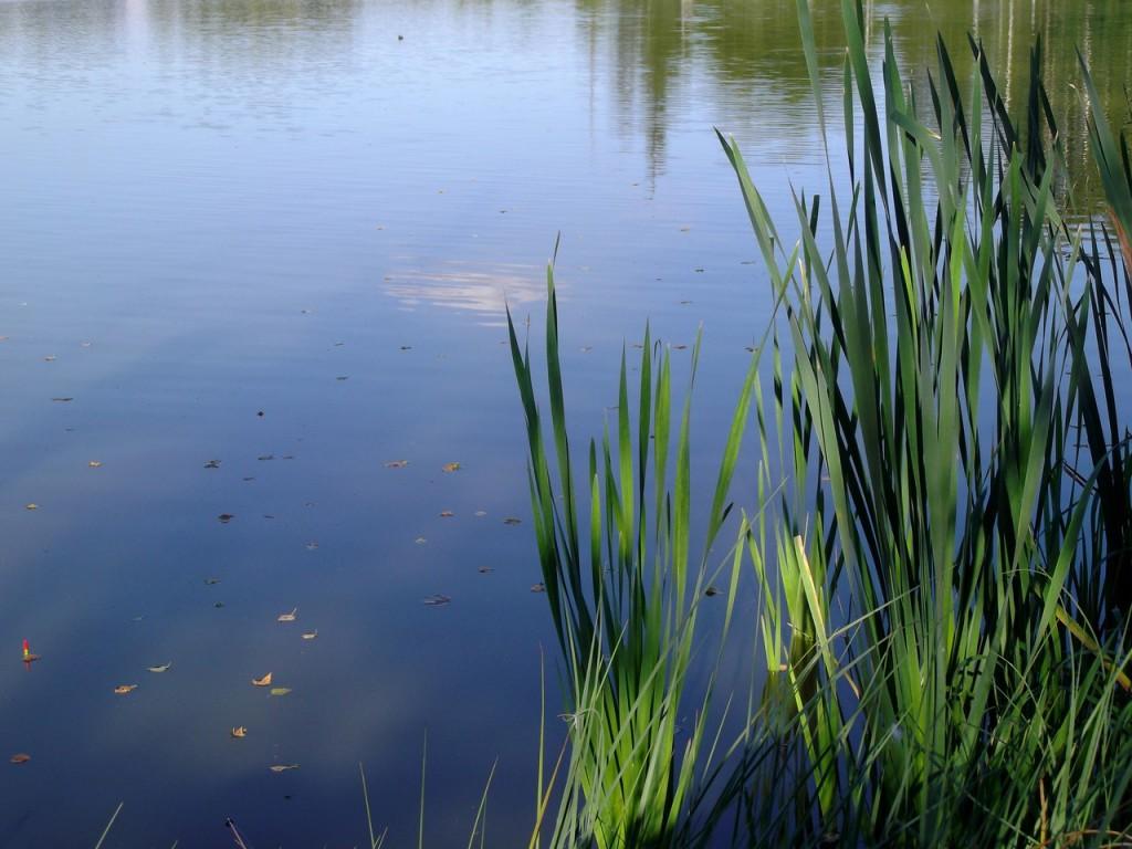 Озеро Вышманово, Собинский район 03