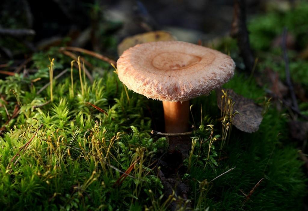 Середина сентября - грибная пора во Владимирской области 06