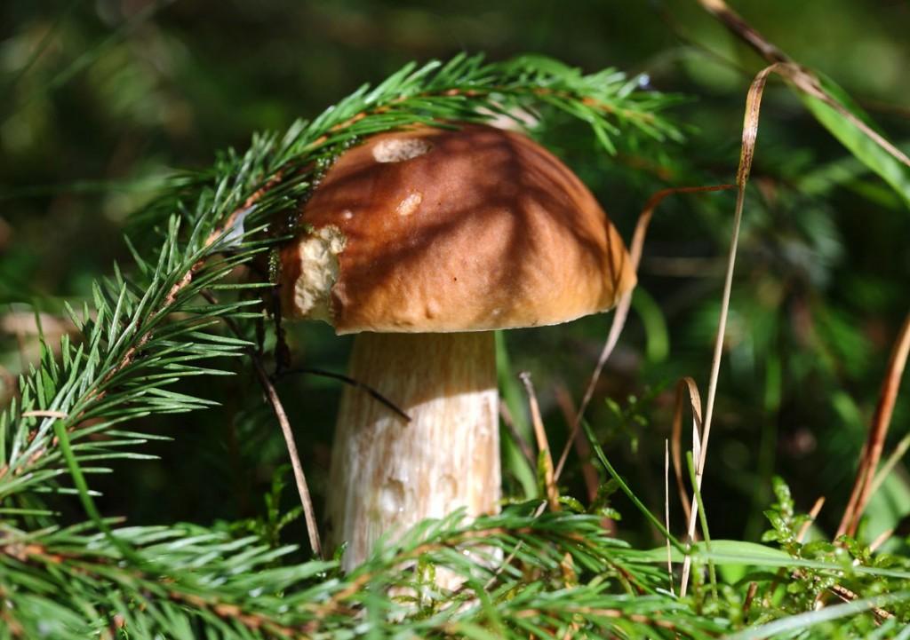 Середина сентября - грибная пора во Владимирской области 08