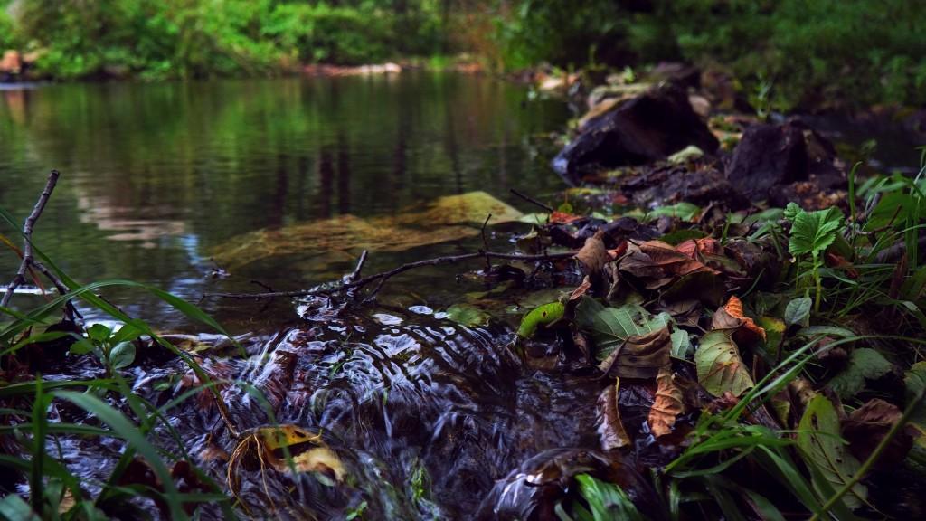 30 августа, поселок Мелехово, река Нерехта 03