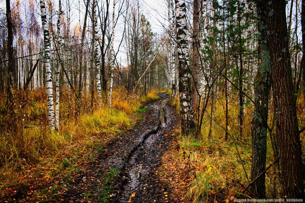Велопоход в Покровские леса 01
