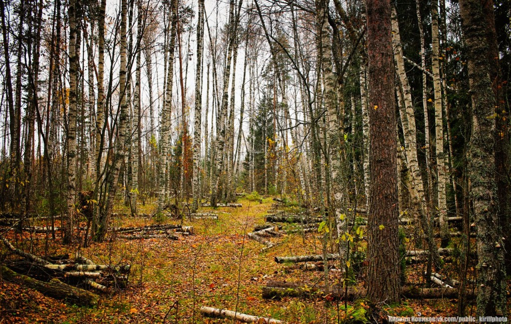 Велопоход в Покровские леса 05