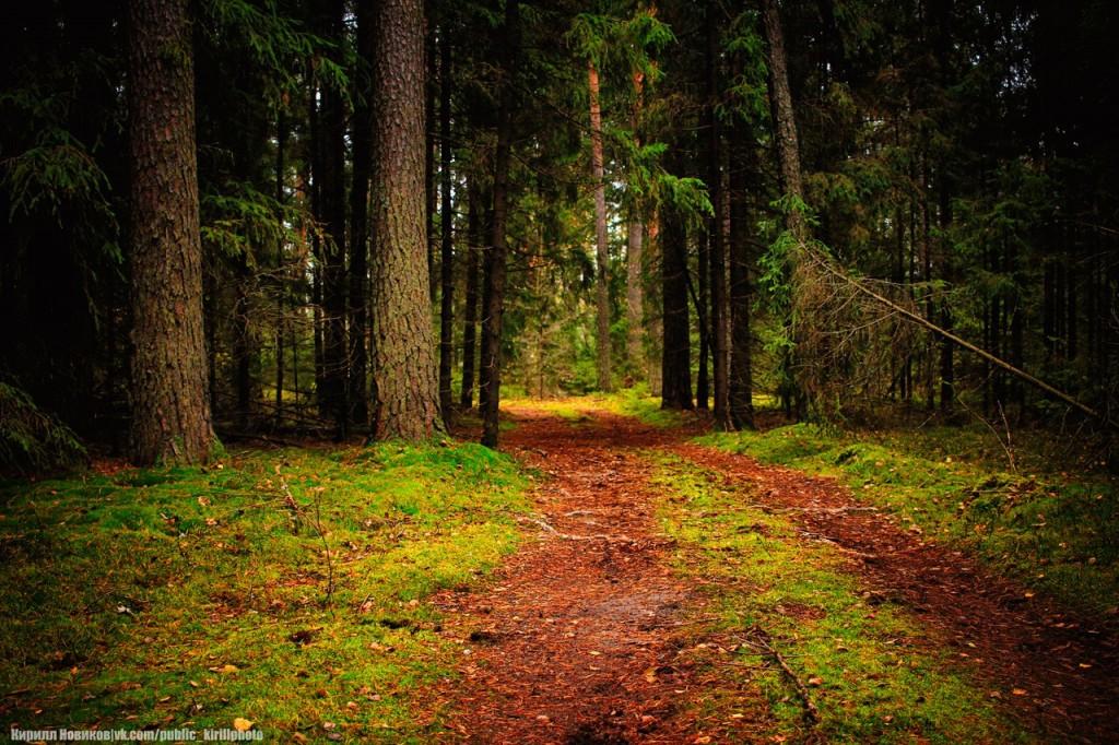 Велопоход в Покровские леса 07