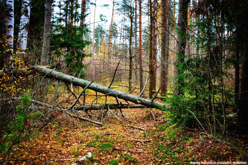 Велопоход в Покровские леса 11