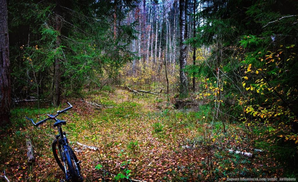 Велопоход в Покровские леса 12