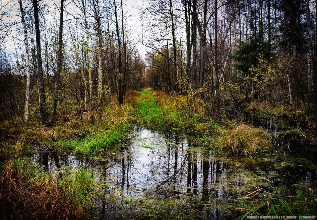 Велопоход в Покровские леса 14