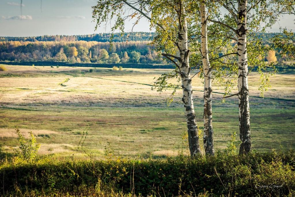 Владимирская область. Золотая осень и русская березка 01
