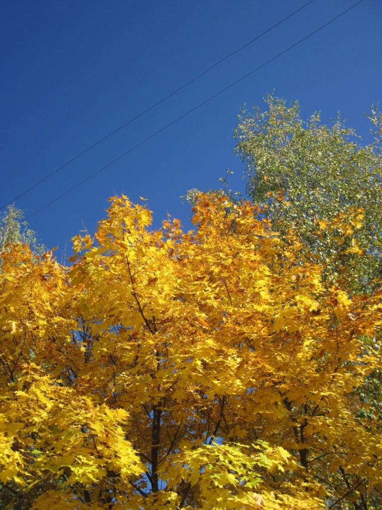 Золотая осень в Вязниках 01