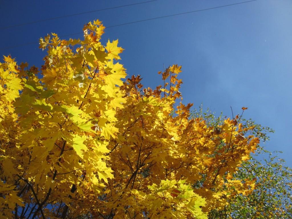 Золотая осень в Вязниках 03