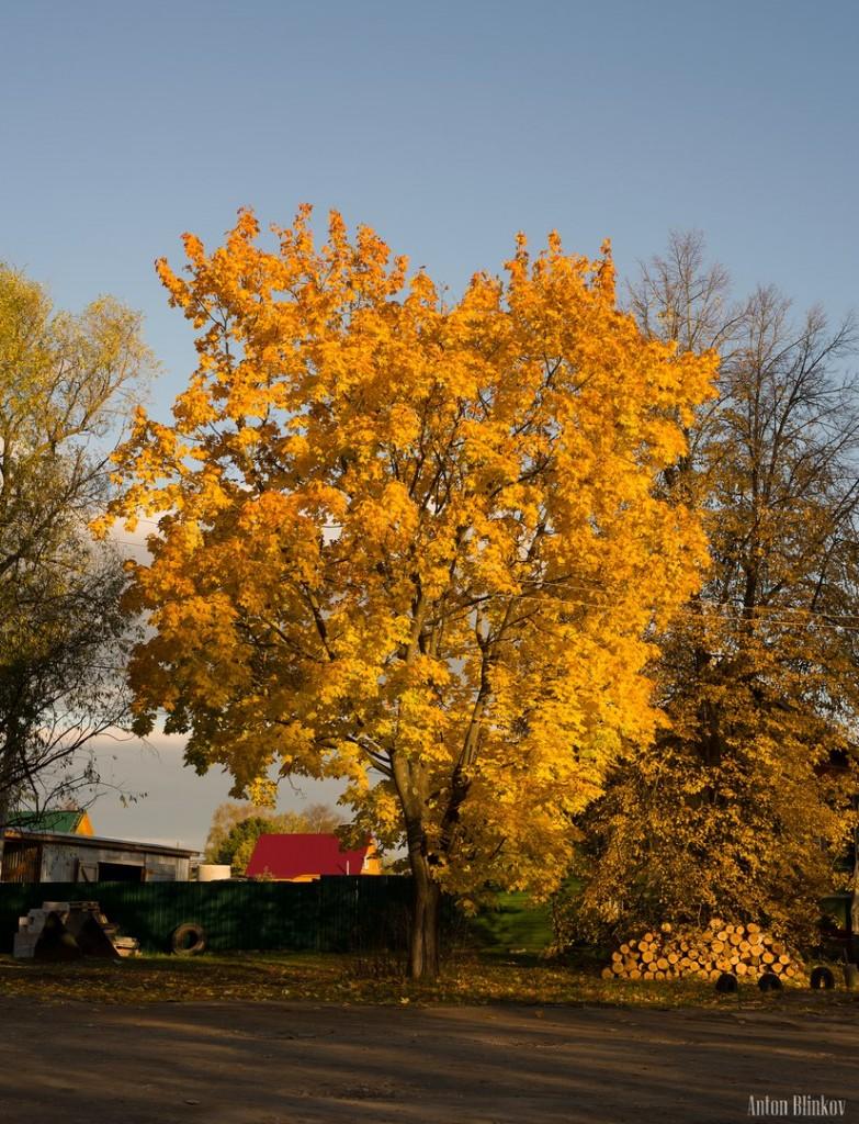 Золотая осень в Меленках