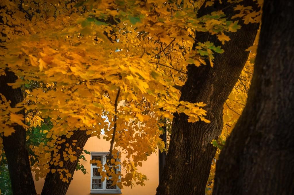 Золотые наряды середины октября 03