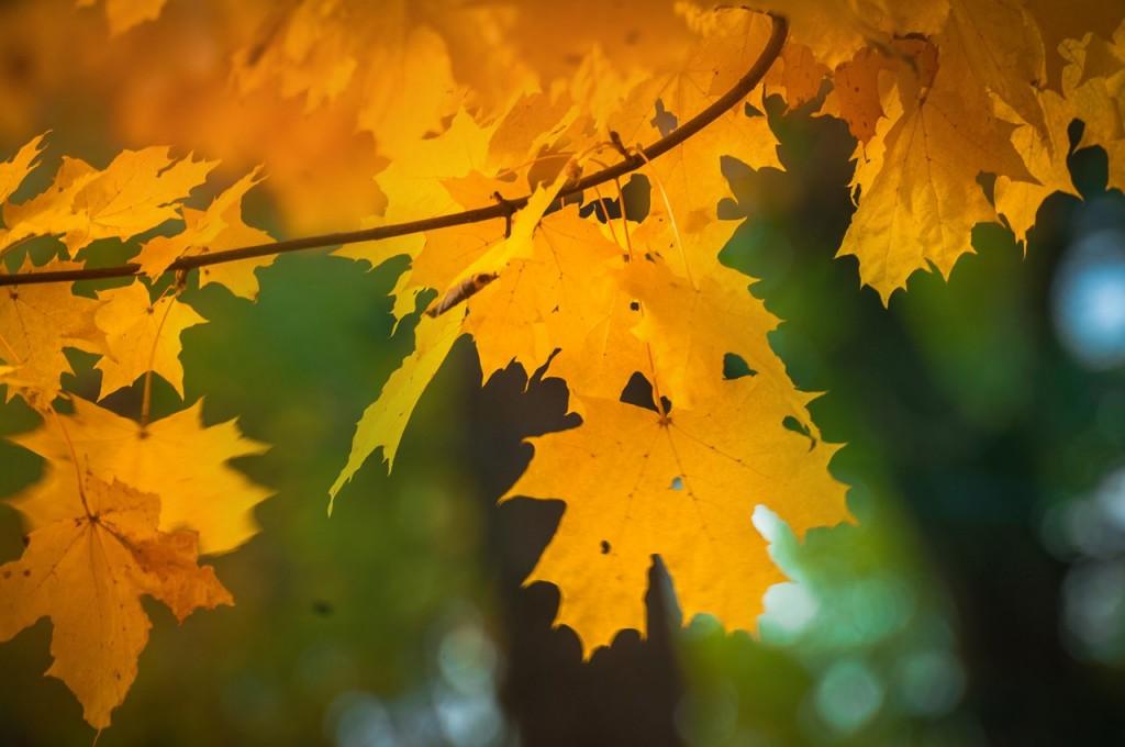 Золотые наряды середины октября 04