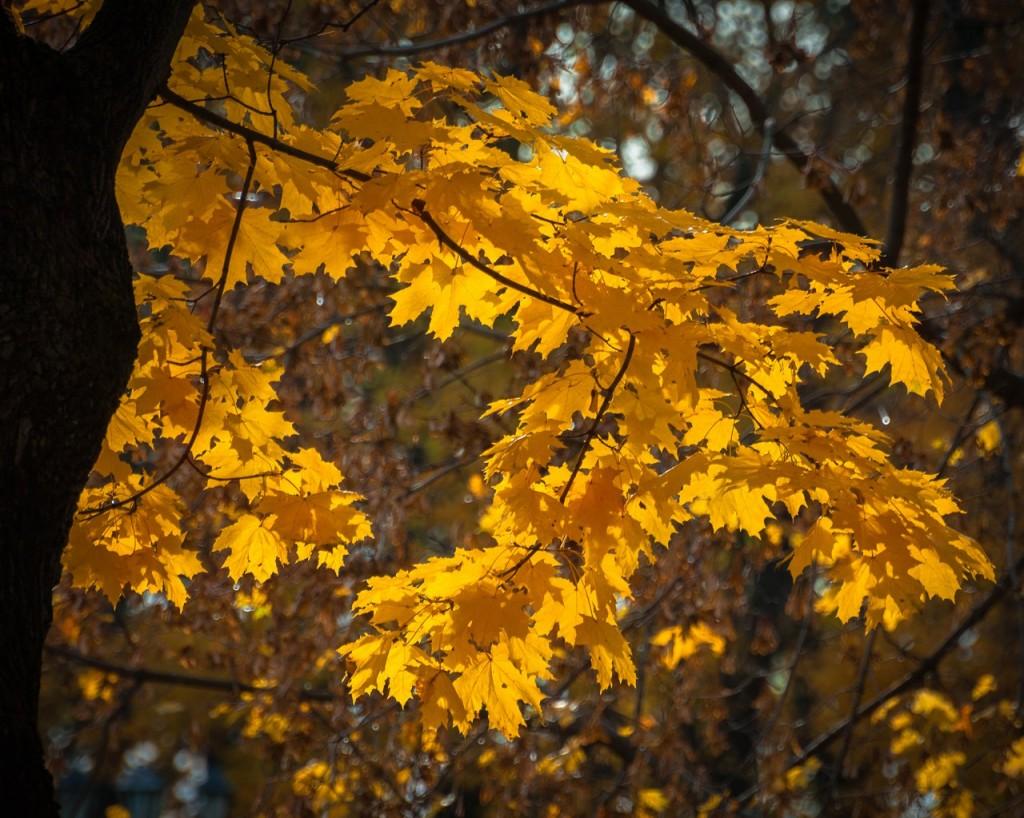 Золотые наряды середины октября 06