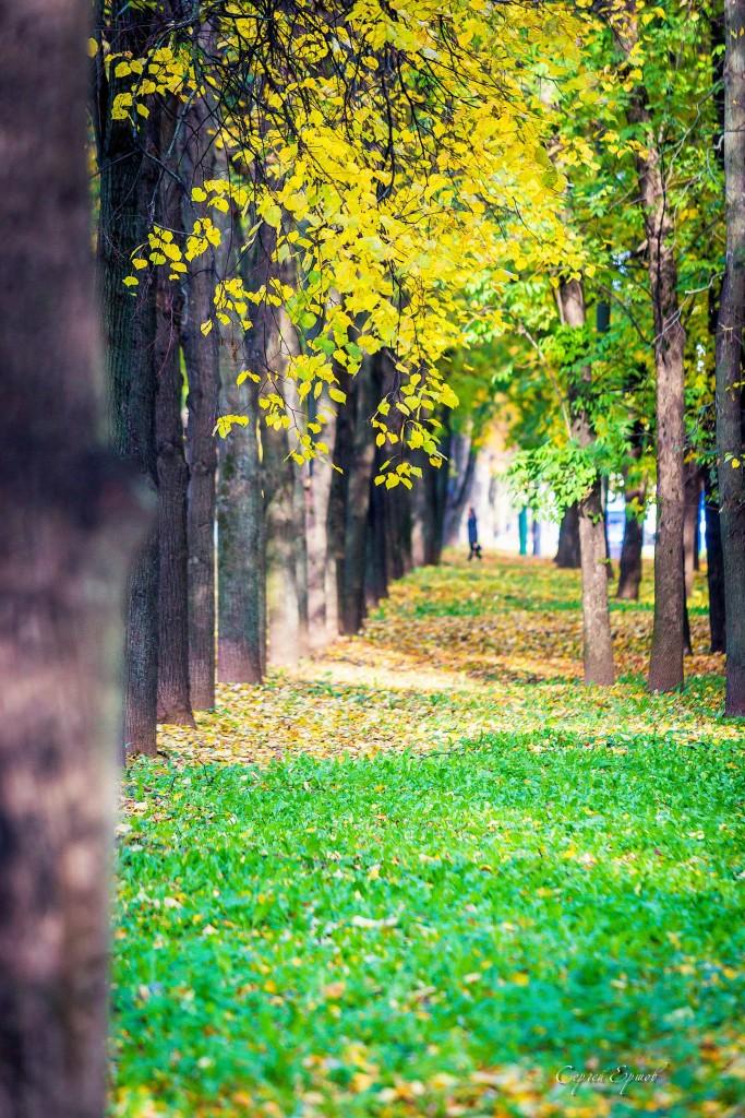 Листья желтые над городом кружатся 01