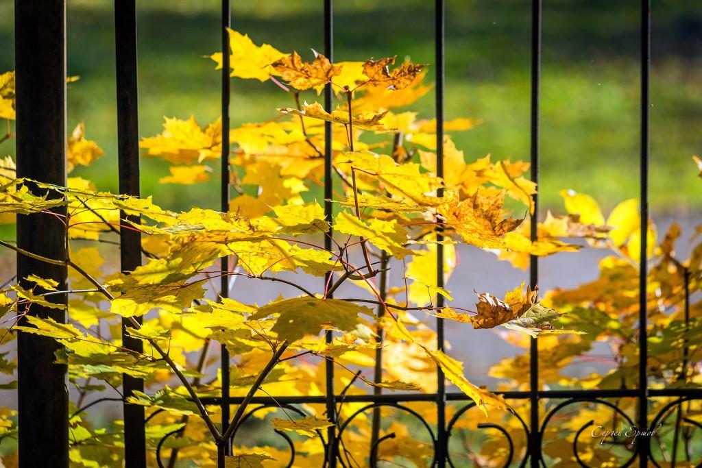 Листья желтые над городом кружатся 02