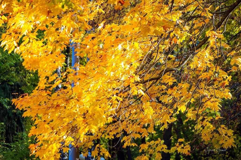 Листья желтые над городом кружатся 03