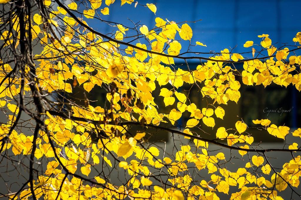 Листья желтые над городом кружатся 04