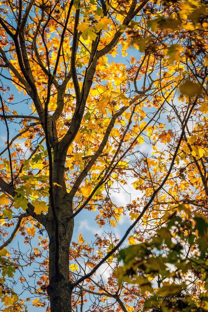 Листья желтые над городом кружатся 05