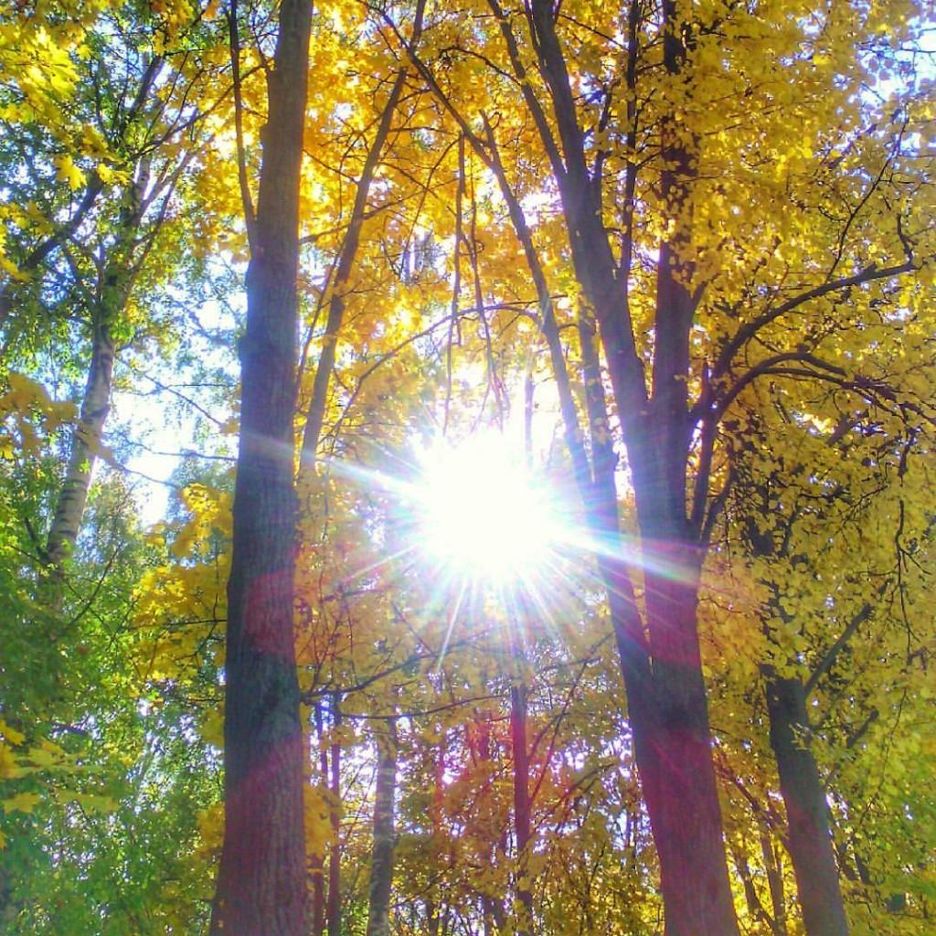 Осеннее солнце так ласково светит...