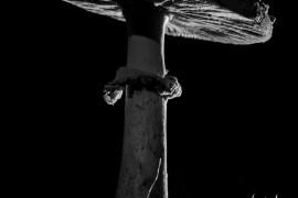 Гигантские осенние мухоморы