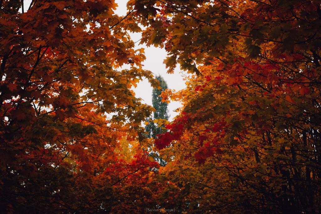 Осенние пейзажи Владимира от Сергея Кравцова 01