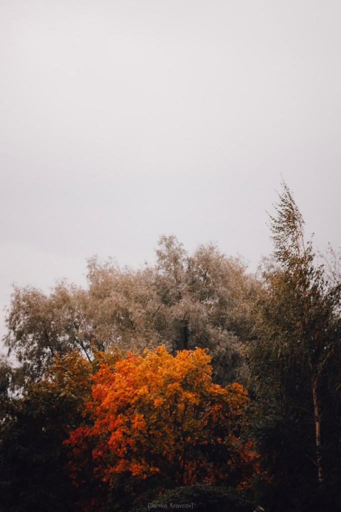 Осенние пейзажи Владимира от Сергея Кравцова 03