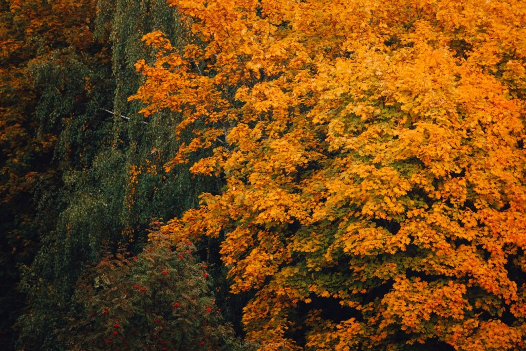 Осенние пейзажи Владимира от Сергея Кравцова 04