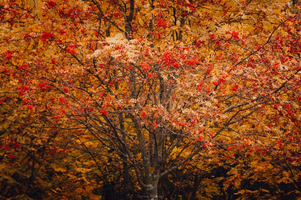Осенние пейзажи Владимира от Сергея Кравцова 05