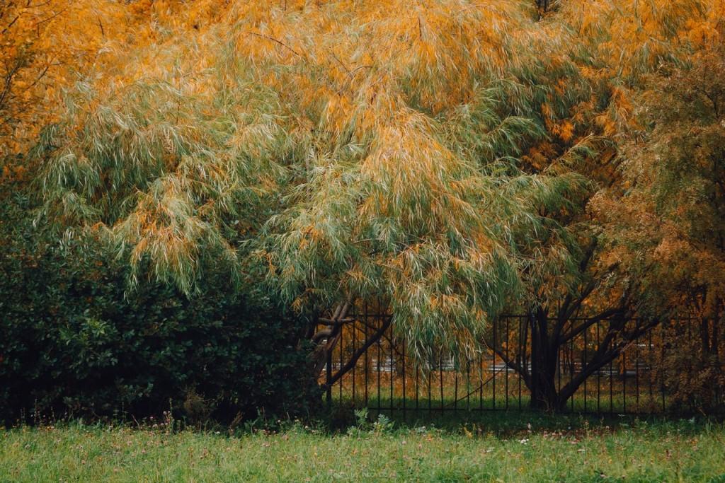 Осенние пейзажи Владимира от Сергея Кравцова 06