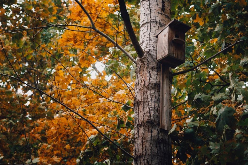 Осенние пейзажи Владимира от Сергея Кравцова 09