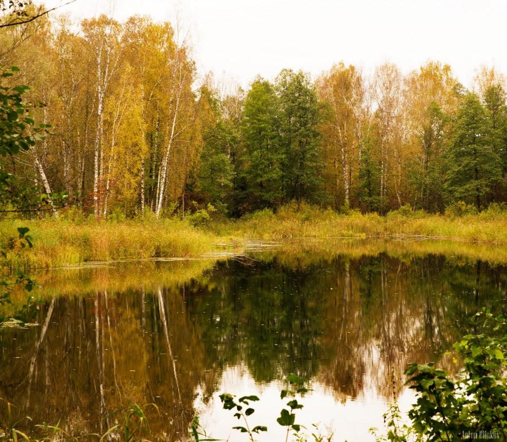 Осенний пейзаж на р. Суворощь, Гороховецкий р-н