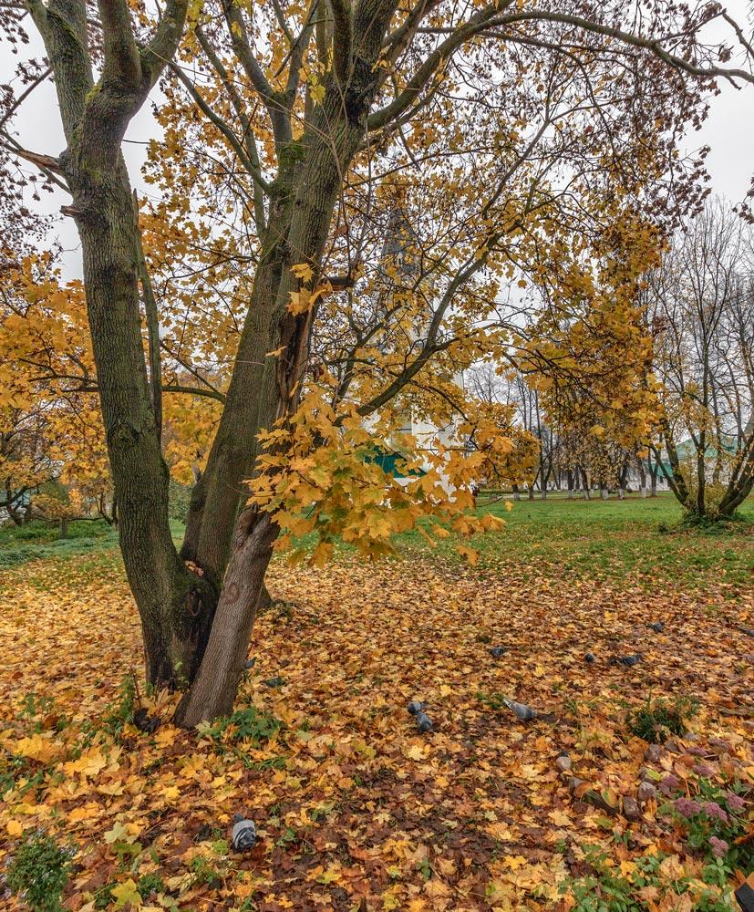 Осень в Александрове 02
