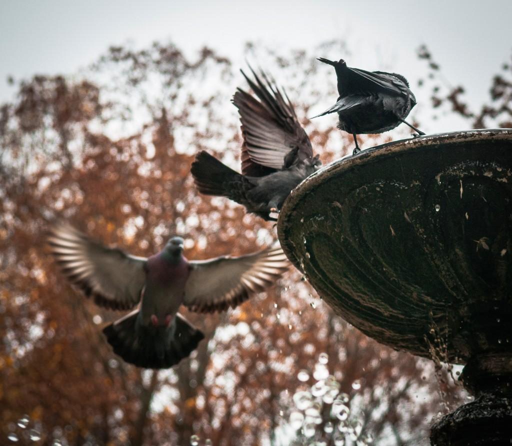 Птицы Владимира 02
