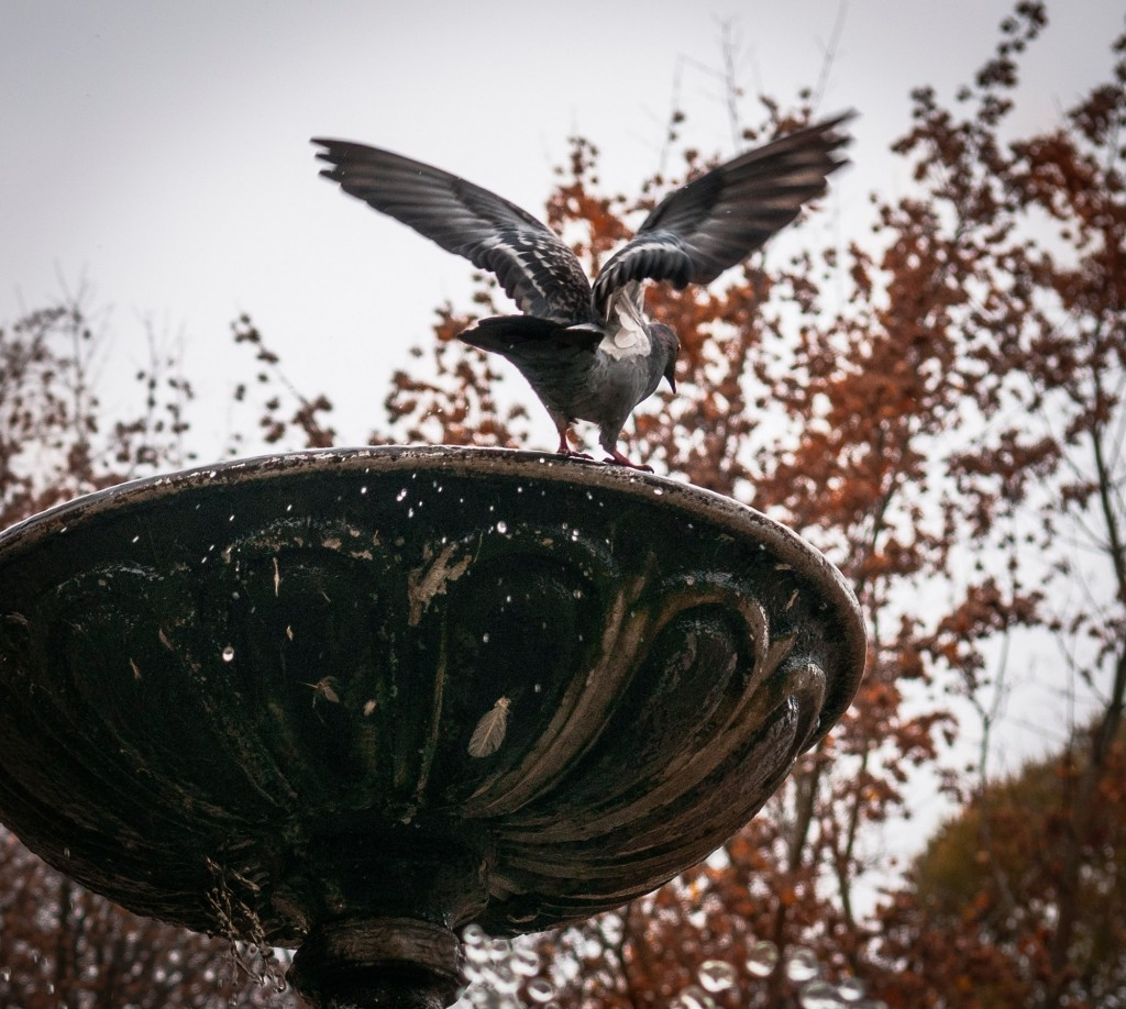 Птицы Владимира 03