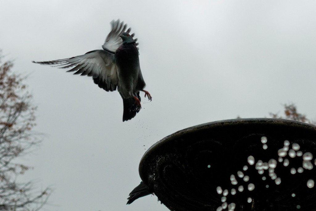 Птицы Владимира 07