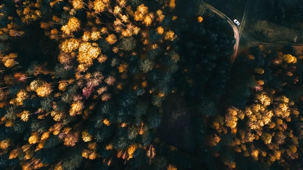 Разноцветная осень. Меленковский р-он