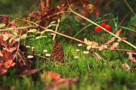 Царь-шишка в окружении своих верных слуг-грибов