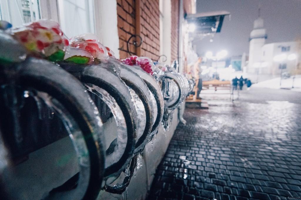 Замороженные цветы 01