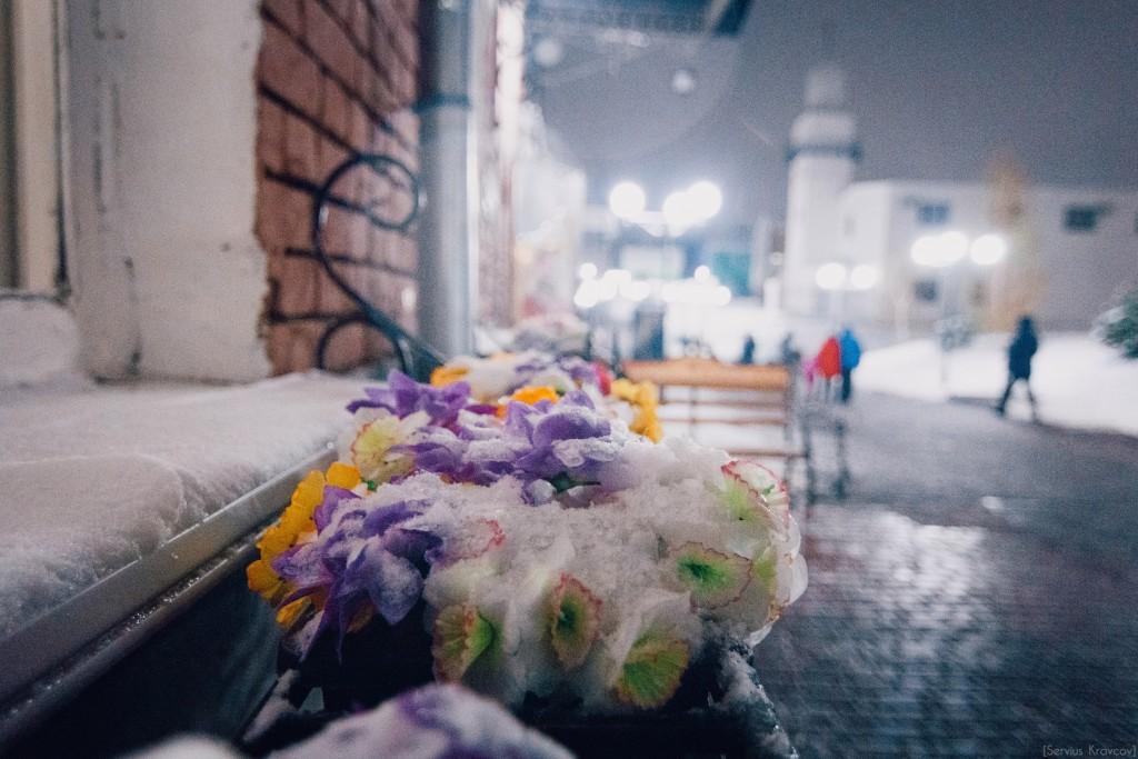 Замороженные цветы 04