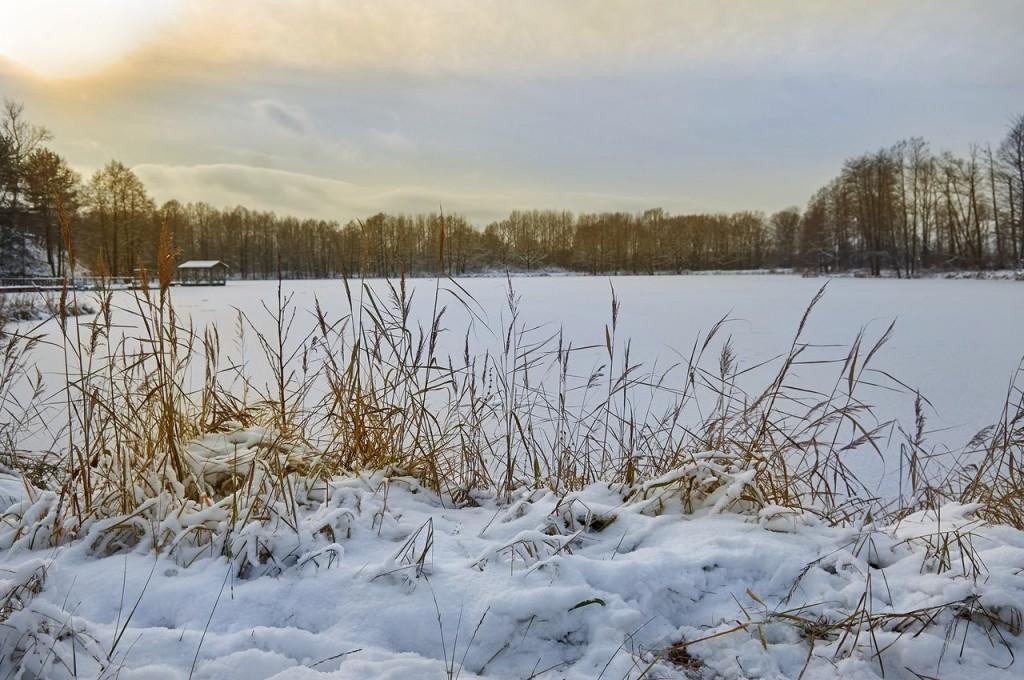 Зима вступает в свои права (загородный парк Владимира) 01